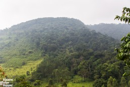 The scenery of Bwindi Impenetrable Forest National Park in Uganda.