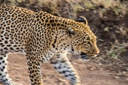 """Looking for the famous """"Big 5"""" Every traveler who comes to Africa will dream about spotting the famous"""