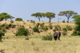 A lone elephant in Tarangire National Park, Tanzania