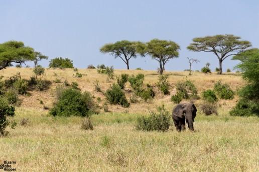 A lone elephant in Tarangire National Park, Tanzania