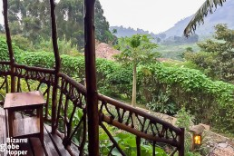 Mahogany Springs, our porch view, Bwindi Impenetrable Forest National Park, Uganda