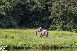 A baby elephant on the bank of the Nile in Murchison Falls National Park, Uganda