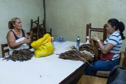 sorting the tobacco leaves, esteli, nicaragua