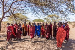 The welcome dance of the Maasai in the Ngorongoro, Tanzania