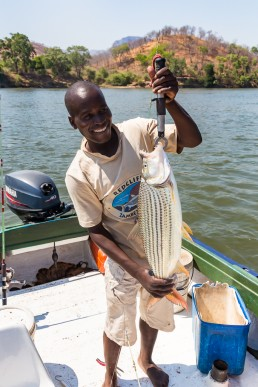 The tigerfish we caught in Lower Zambezi National Park, Zambia