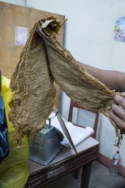 light tobacco leaves, esteli, nicaragua
