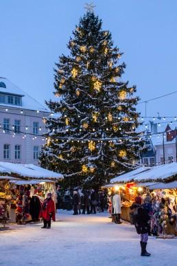 Christmas tree at the Christmas market in Tallinn, Estonia