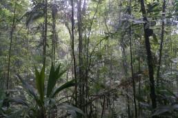 Ozygen smoke in Canta Gallo hill, Indio Maiz Biological Reserve