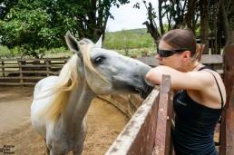 Horses of Rancho Chilamate, San Juan Del Sur, Nicaragua