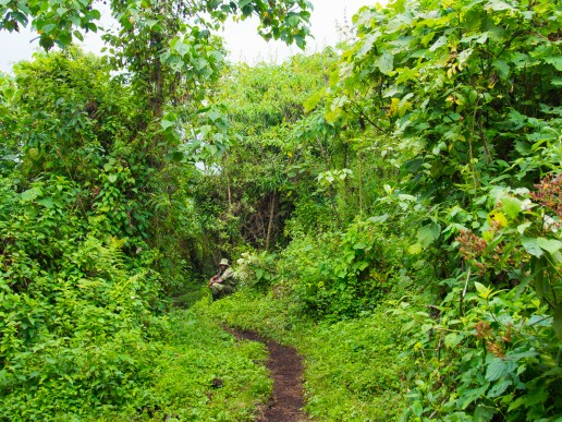 Nyiragongo trek starts from the dense rainforest before crossing barren lava fields