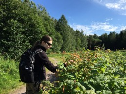 Piritta picking wild raspberries in the central park of Helsinki