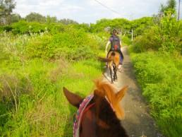 Horseback riding in Gili Meno, Indonesia