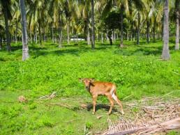 Lush inland palm groves of Gili Trawangan