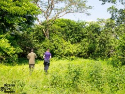 Walking safari to track down rhinos in Uganda