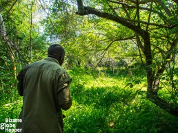 Tracking white rhinos in Uganda with a ranger