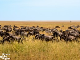 Plan your safari well to find the great migration that crosses Serengeti National Park