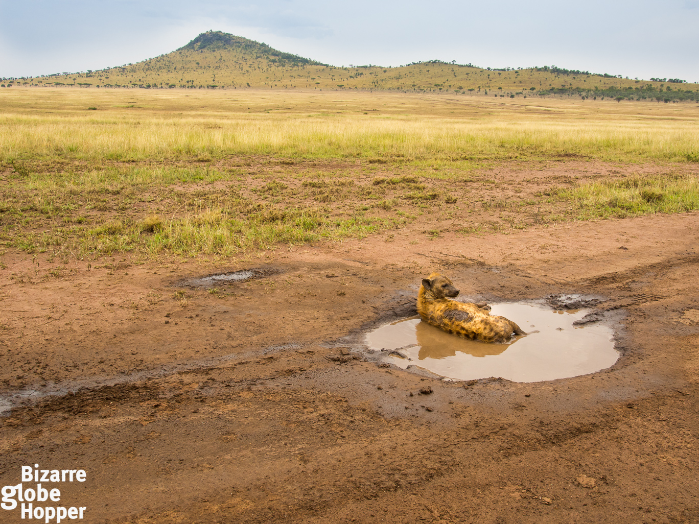 How To Find The Best Wildlife Sightings In Serengeti National Park The Bizarre Globe Hopper