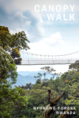 Step on the Nyungwe Forest's Canopy Walkway to take a bird-eye on the wildlife and centuries old treetops.