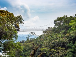 The hanging and swaying Nyungwe canopy walkway, Rwanda