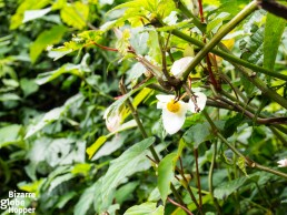 Flower and orchid species in Nyungwe Forest National Park