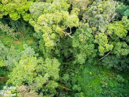 Nyungwe Forest National Park's treetops seen from the canopy walkway, Rwanda