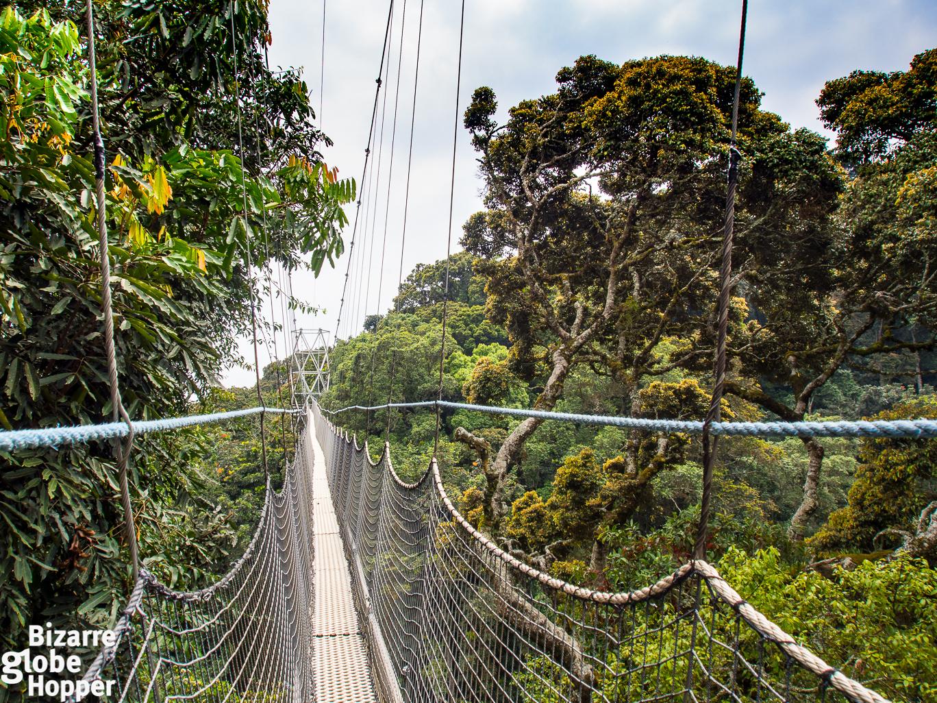 Nyungwe Forest Canopy Walkway Rwanda & Canopy Trekking in Nyungwe Forest Rwanda u2013 Bizarre Globe Hopper
