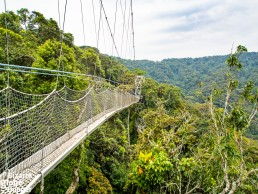 Nyungwe Forest canopy walkway crosses hundreds of years old tree canopy