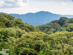 View to Nyungwe Forest Canopy in Rwanda