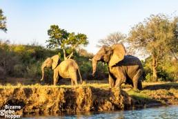 Wildlife watching from a canoe in Lower Zambezi National Park