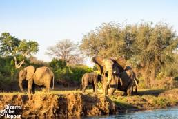 Canoe safari on Zambezi river, Zambia