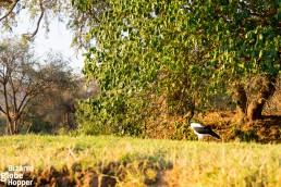 Watching hornbills from the canoe