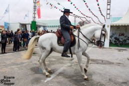More Andalucian horses showing their skills than you can count!