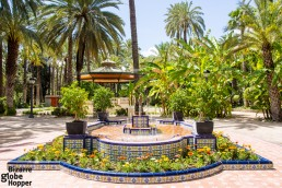 Europe's biggest palm grove forms Elche City Park