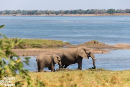 Elephants crossed the premises of Royal Zambezi Lodge every day we stayed there