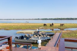 Elephants visiting the shore just in front of Royal Zambezi Lodge