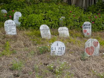 Bike to the Golden Gate Bridge – For an Abandoned Pet Cemetery!
