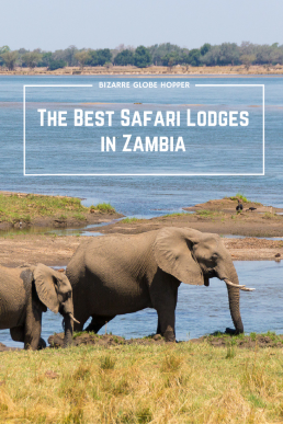 Smell out the hidden gems of Zambia! Optimize wildlife watching opportunities, find the best guides and delight in lavish camps.