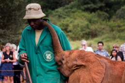 Elephant orphans adore their the Keepers of The David Sheldrick Wildlife Trust
