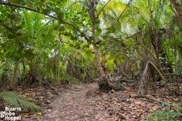 Would you like to hike or ride on this jungle path?