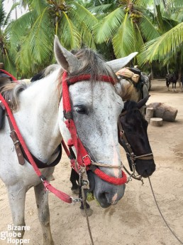 Meet our loyal horses, who escorted us from Cañaveral to Cabo San Juan del Guia