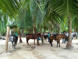Cañaveral is the best place to rent a horse in Tayrona National Park, although you might be lucky to find a vacant horse also from Cabo San Juan del Guia