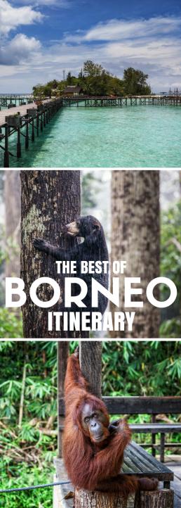 The best of Borneo squeezed into a 2-week itinerary: orangutans, proboscis monkeys, pygmy elephants, and turtles; Danum Valley, Kinabatangan, Lankayan Island and more!