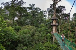 Danum Valley's Canopy Walkway is a dream come true for nature photographers