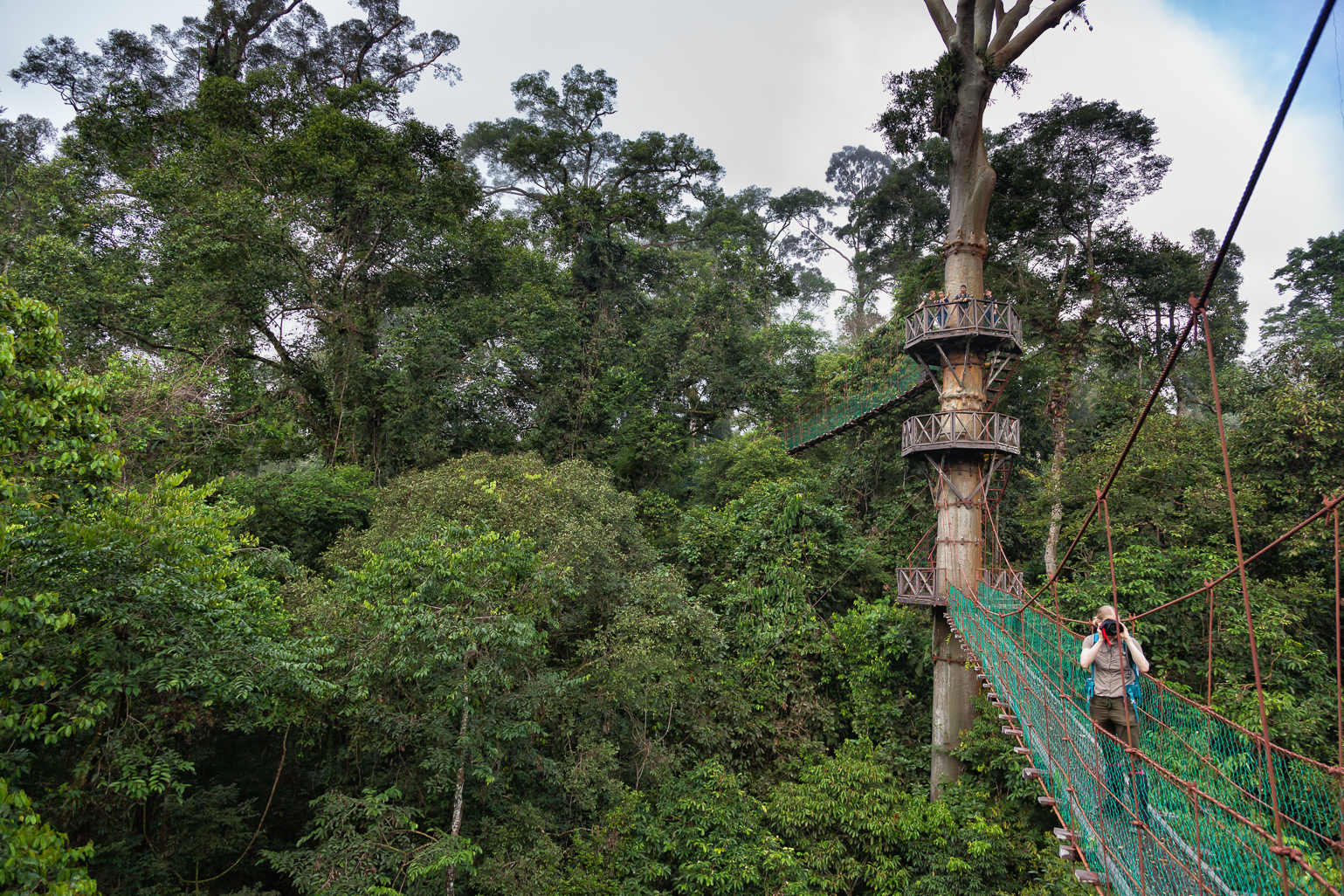 Danum Valleyu0027s Canopy Walkway is a dream come true for nature photographers & Best Lodges to Experience the Real Borneo Malaysia u2013 Bizarre ...