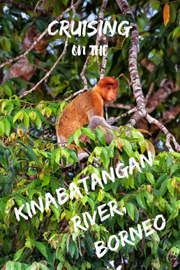 Take a boat ride to the Kinabatangan River in Borneo and keep an eye out for the Bornean Pygmy Elephants and Proboscis monkeys.