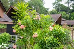 The cabins of MY Nature Resort, Sepilok