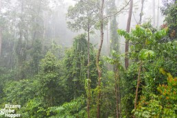Stunning view to the rainforest from our private terrace in MY Nature Resort - it rains in the rainforest!