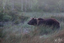 This bear was called Mörkö (which means