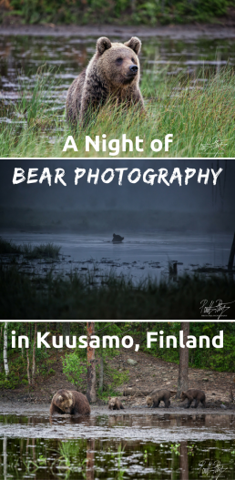 Photographing bears through the night in a hide in the Finnish wilderness in Kuusamo.