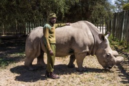Sudan and one of his six caretakers, Jim, in the Ol Pejeta Conservancy in Kenya in February 2016.